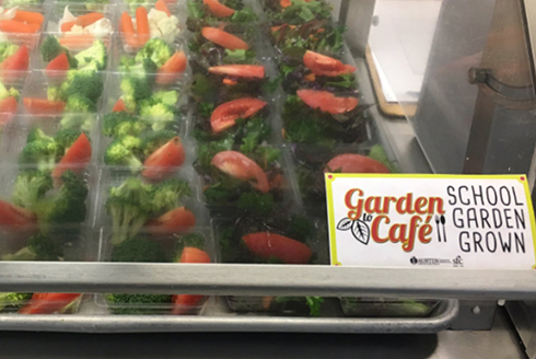 Two salad options grown from the school garden in the cafeteria