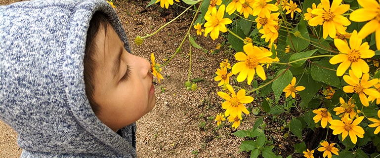 Elementary aged female student passionately smelling yellow flower.